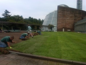 Laying sod at Foxwoods Resort Casino